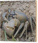 Great Land Crab Wood Print
