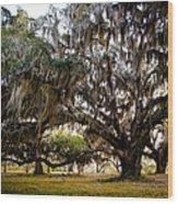 Great Live Oak Wood Print