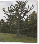 Great Oaks From Little Acorns Grow Wood Print