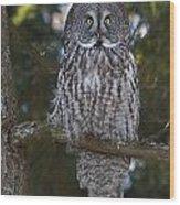 Great Owl Eyes Wood Print