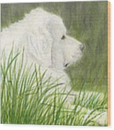 Great Pyrenees Dog In Grass Animal Pets Canine Art Wood Print