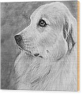 Great Pyrenees In Profile Drawing Wood Print