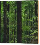 Great Smoky Mountains Forest Wood Print