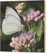 Great Southern White Butterfly On Pink Flowers Wood Print