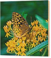 Great Spangled Fritillarie Ins 77 Wood Print