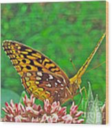 Great Spangled Fritillary Butterfly - Speyeria Cybele Wood Print