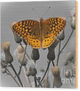 Great Spangled Fritillary Wood Print