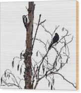 Great Spotted Woodpecker And A Blackbird. Dude What Are You Doing Wood Print