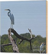 Great White Egret And Friend Wood Print
