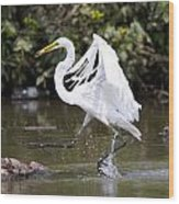 Great White Egret And Turtle Friends1 Wood Print