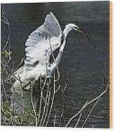 Great White Egret Building A Nest V Wood Print