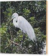 Great White Egret Building A Nest Viii Wood Print