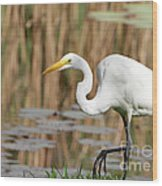 Great White Egret By The River Wood Print by Sabrina L Ryan