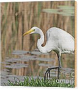 Great White Egret By The River Too Wood Print