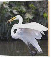 Great White Egret Eating Fish 1 Wood Print