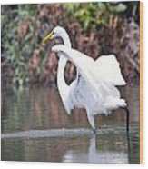 Great White Egret Fishing 1 Wood Print