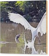 Great White Egret Fishing Sequence 2 Wood Print