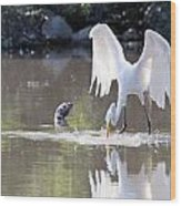 Great White Egret Fishing Sequence 4 Wood Print