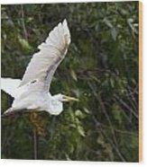 Great White Egret Flying 1 Wood Print