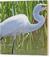 Great White Egret In Horicon Marsh Wood Print