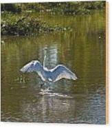 Great White Egret In Sunlight Wood Print
