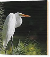 Great White Egret In The Tree Wood Print
