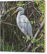 Great White Egret In The Wild Wood Print