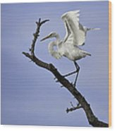 Great White Egret In Tree Wood Print