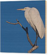 Great White Egret On A Snag Wood Print