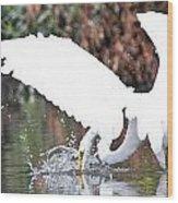 Great White Egret Splash 1 Wood Print