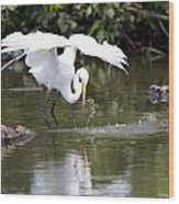 Great White Egret Wingspan And Turtles Wood Print