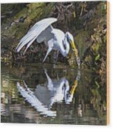 Great White Heron Fishing Wood Print by Charles Warren