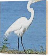 Great White Heron Wood Print by Julie Cameron