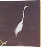 Great White Huron Wood Print