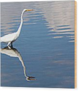 Great White Reflected Wood Print