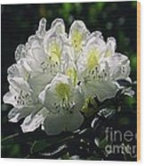Great White Rhododendron Wood Print