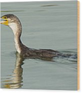 Greater Cormorant Eating A Fish Wood Print