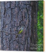 Greater Crested Flycatcher Wood Print