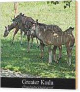 Greater Kudu Wood Print