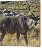 Greater Kudu Grazing Wood Print