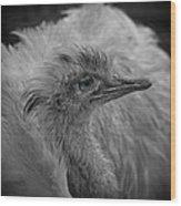 Greater Rhea Wood Print