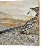 Greater Roadrunner With Nest Material Wood Print