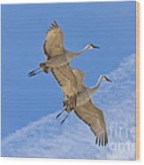 Greater Sandhill Cranes In Flight Wood Print