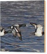 Greater Scaup Drakes Flight Wood Print