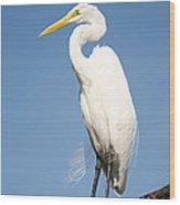 Greater White Egret Wood Print