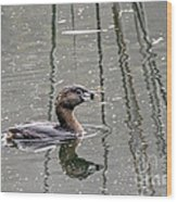 Grebe In The Reeds Wood Print