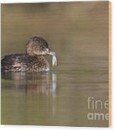 Grebe With Feather Wood Print