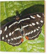 Grecian Shoemaker Butterfly Wood Print