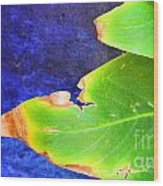 Green And Blue  Wood Print by Bobby Mandal