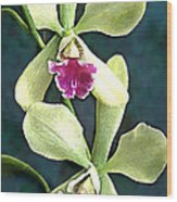 Green And Purple Cattleya Orchids Wood Print